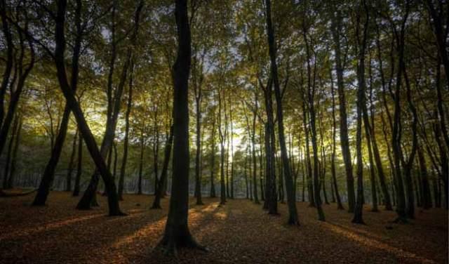Woods_Sun