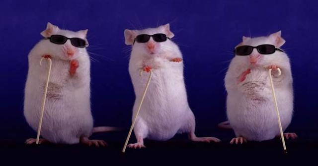 lab-rats-02